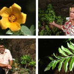 Living Jewels – The Rare Plants of Hawai'i