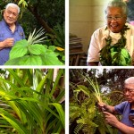 The Hawaiian Art of Healing