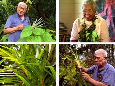 Hawaiian plants, indigenous medicine, ethnobotany, herbal medicine, Henry Auwae, Hawaiian culture, biodiversity