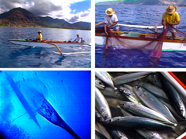 Hawaiian culture, Hawaiian fishing, opelu, Pacific mackerel fishing, Walter Keliiokekai Paulo, Eddie Kaanana, opelu fishing, Kahumoku Brothers
