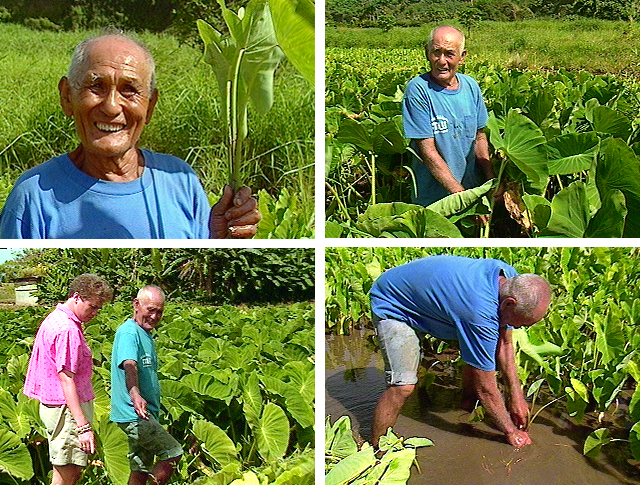 James Hueu, Hawaiian language, Hawaiian culture, Keanae, Maui, kalo, streams, Hawaiian agriculture, taro varieties