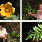 Living Jewels – The Rare Plants of Hawai'i