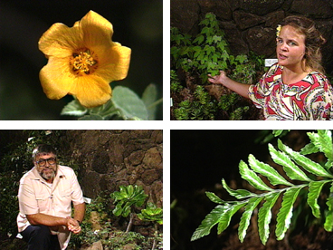 Hawaiian plants, Hawaiian flora, native plants, native species, botany, Heidi Bornhorst, Charles Lamoureux