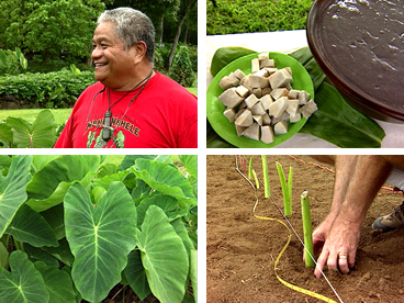 Jerry Konanui, Hawaiian culture, kalo, taro, taro varieties, Hawaiian horticulture, Hawaiian values, GMO, genetic engineering