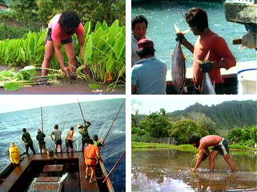 Hawaiian culture, Hawaiian fishing, aku fishing, tuna, Kaiana Ahmad, Keoki Fukumitsu, kalo, farming, sustainability, aku boat, taro